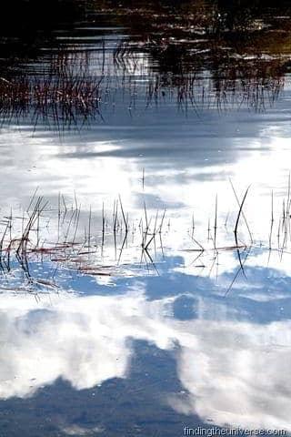 Reeds in Lake Rotopounamu