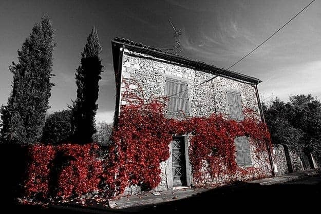 Red leaf coated house 2