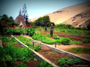 Guest post: The Wonderful World of WWOOF