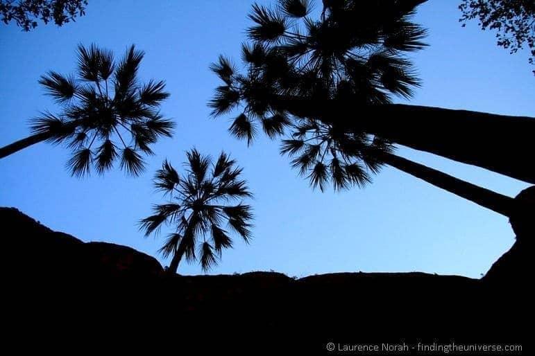 Palms - Echidnae Chasm - Australia