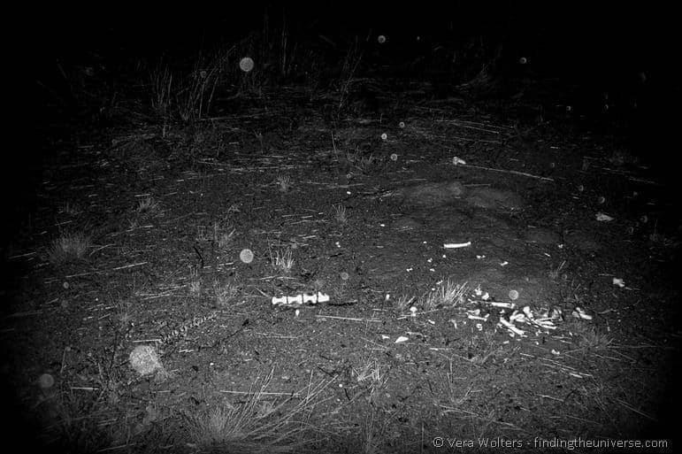 Pile of bones outback