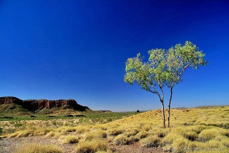 Purnululu bungle bungle rock tree outback scenery
