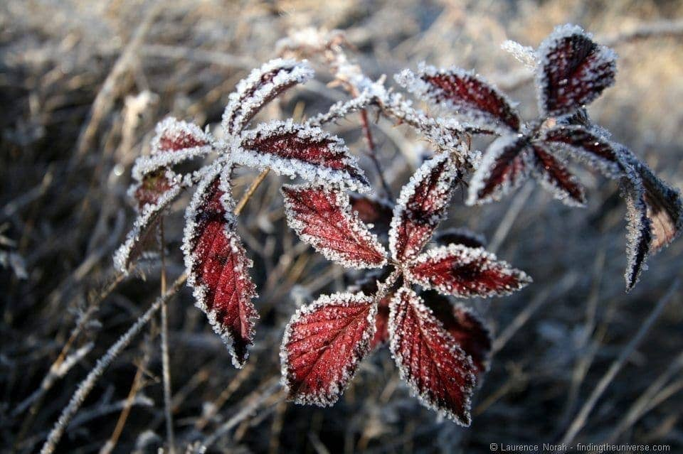 Frost covered leaves New Zealand