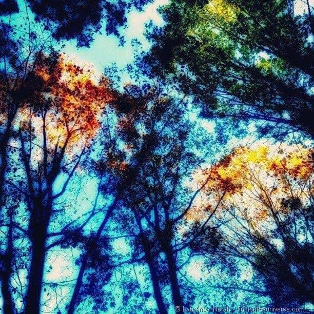 Instagram autumn trees