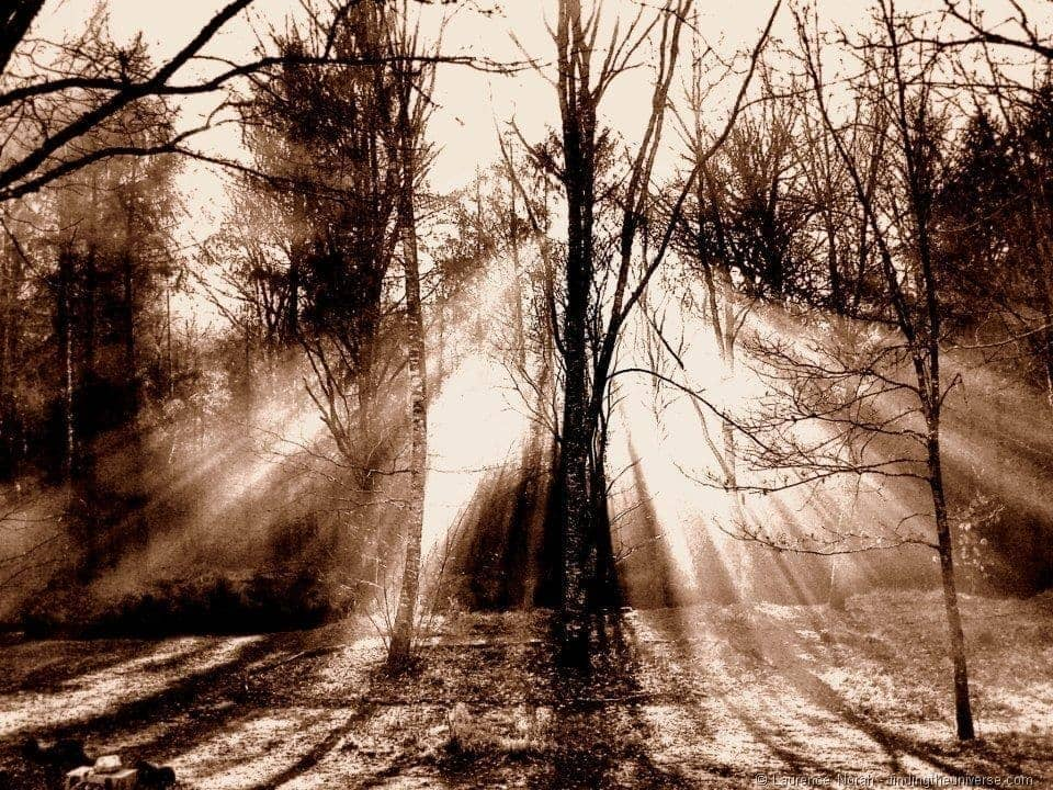 Light filtering through trees