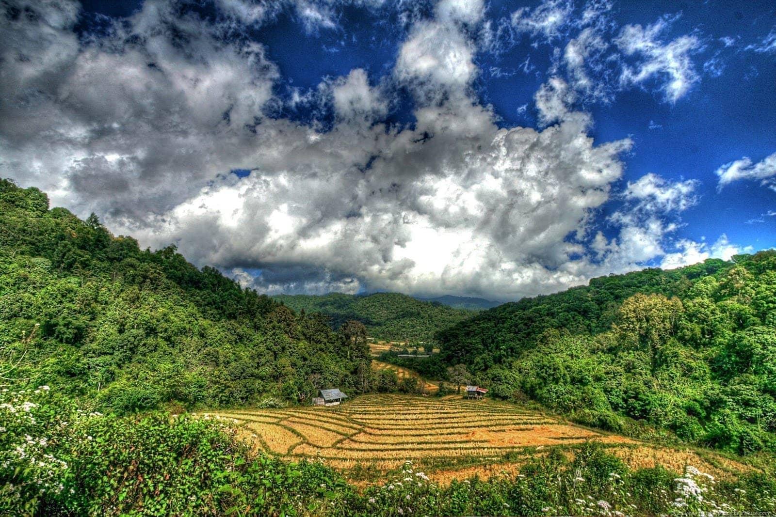 Rice paddies Doi Inthanon