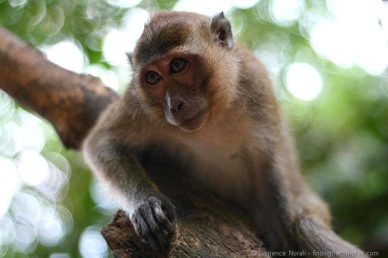 Monkey 1 Khao Sok