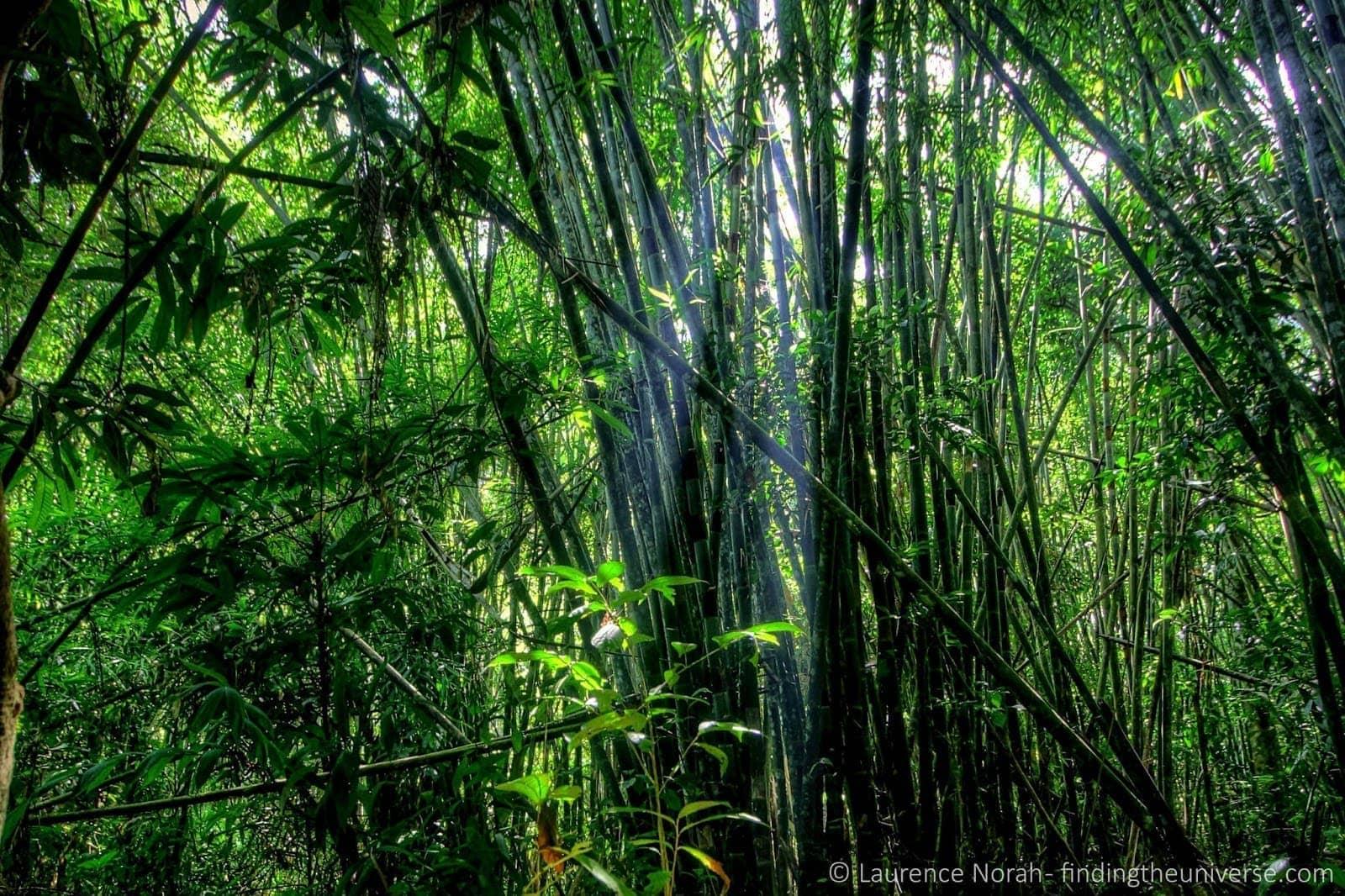 Khao Sok National Park rainforest light streaming bamboo
