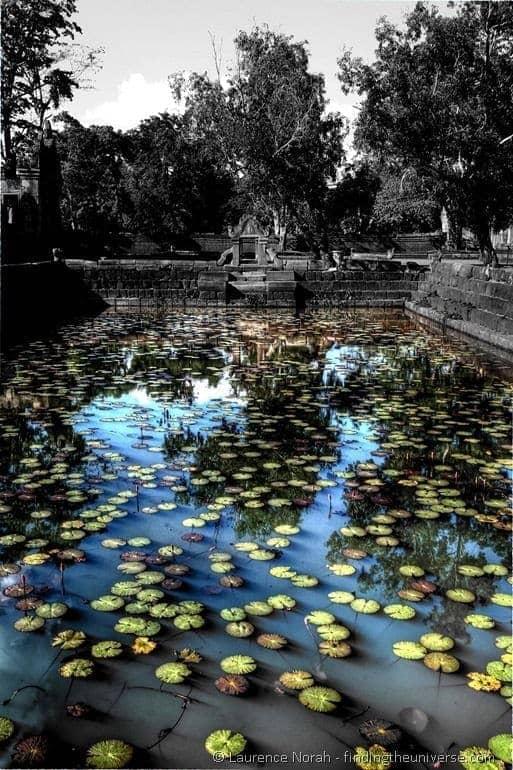 Lily pond Prasat Muang tam Thailand 2
