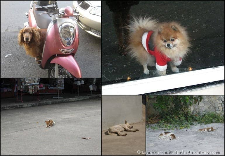 Thai dog collage