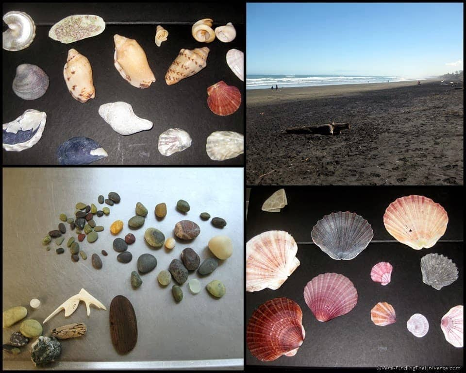 Shells and Stones Muriwai New Zealand