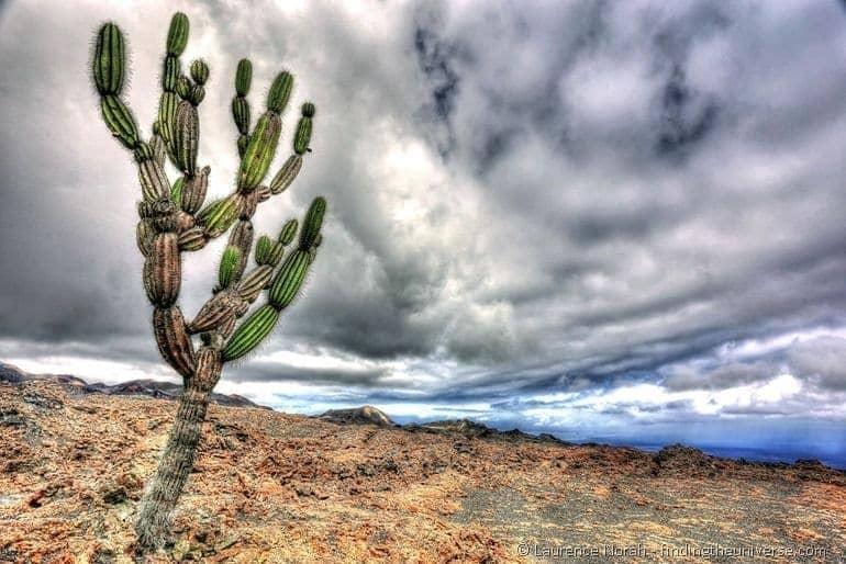 Galapagos cactus 2