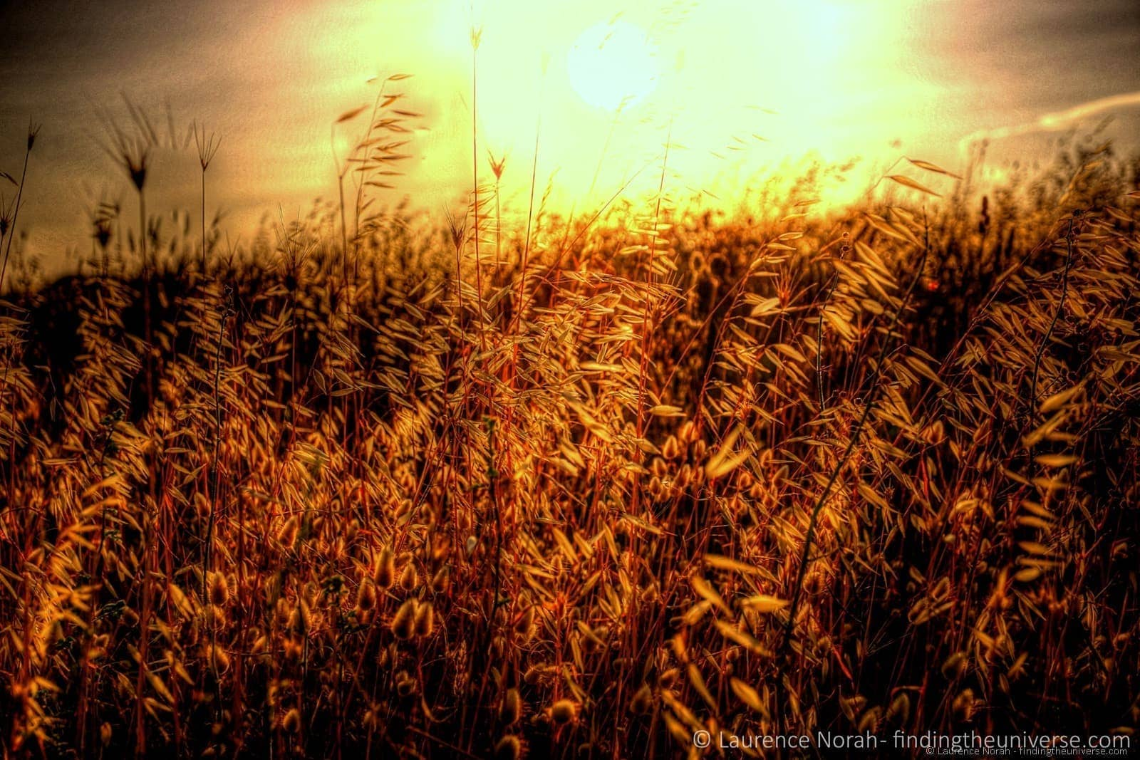 Grass stalks sunset field light scaled