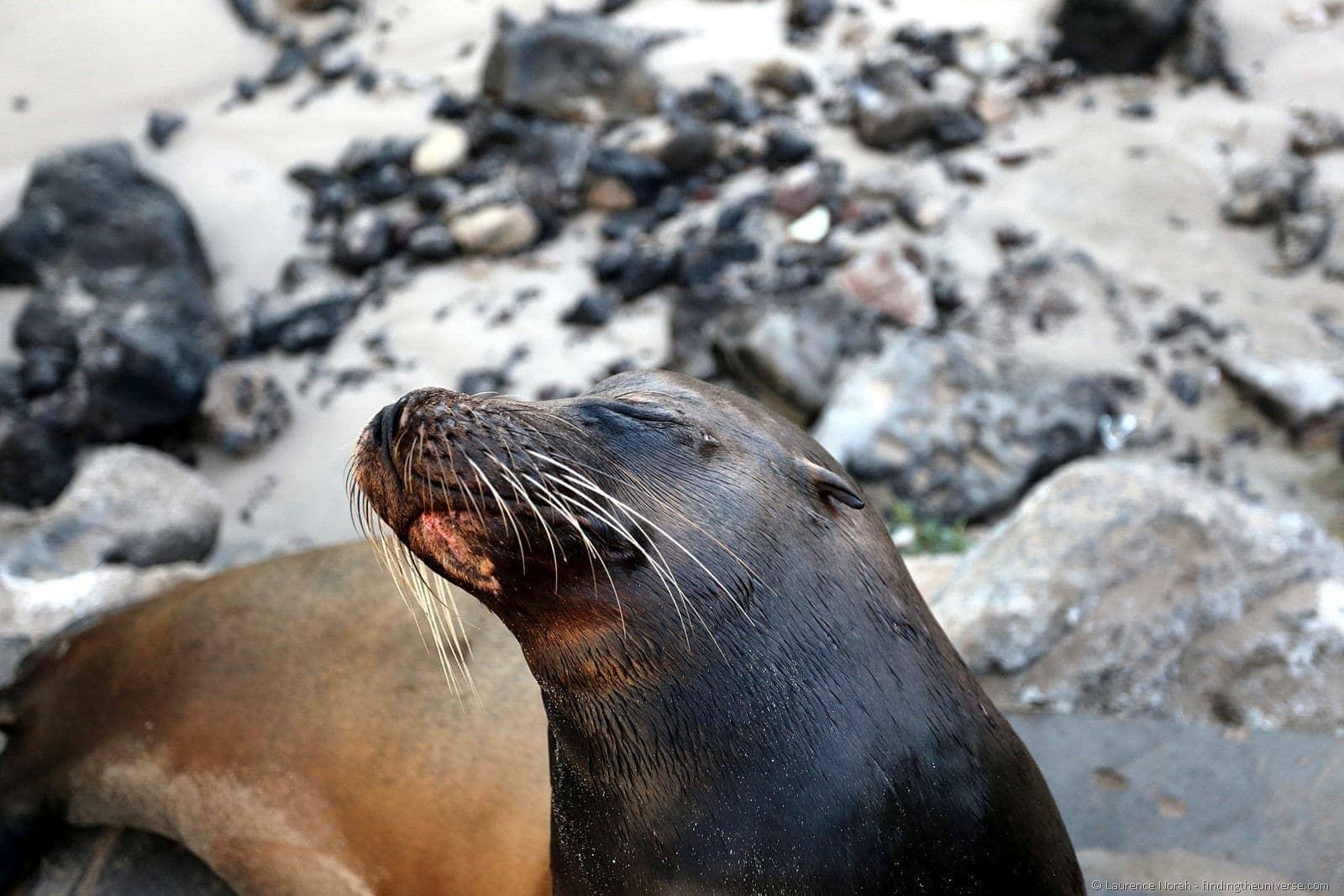 Sea lion close up galapagos
