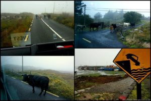 Galway and its Hookers