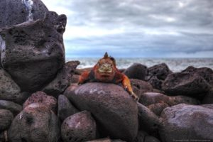Hiking, biking, cycling and more! An adventure tour of the Galapagos