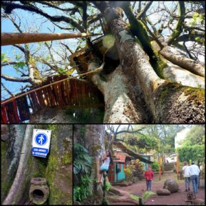And Tarzan Was Jealous: Treehouse Living In The Galapagos