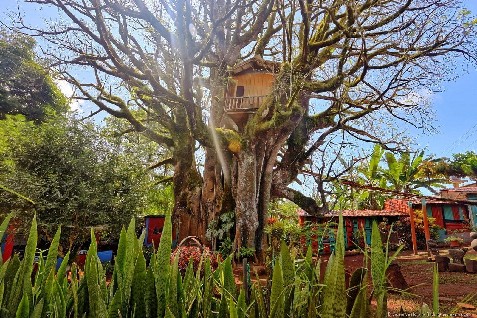 treehouse side view Galapagos san cristobal accommodation 2