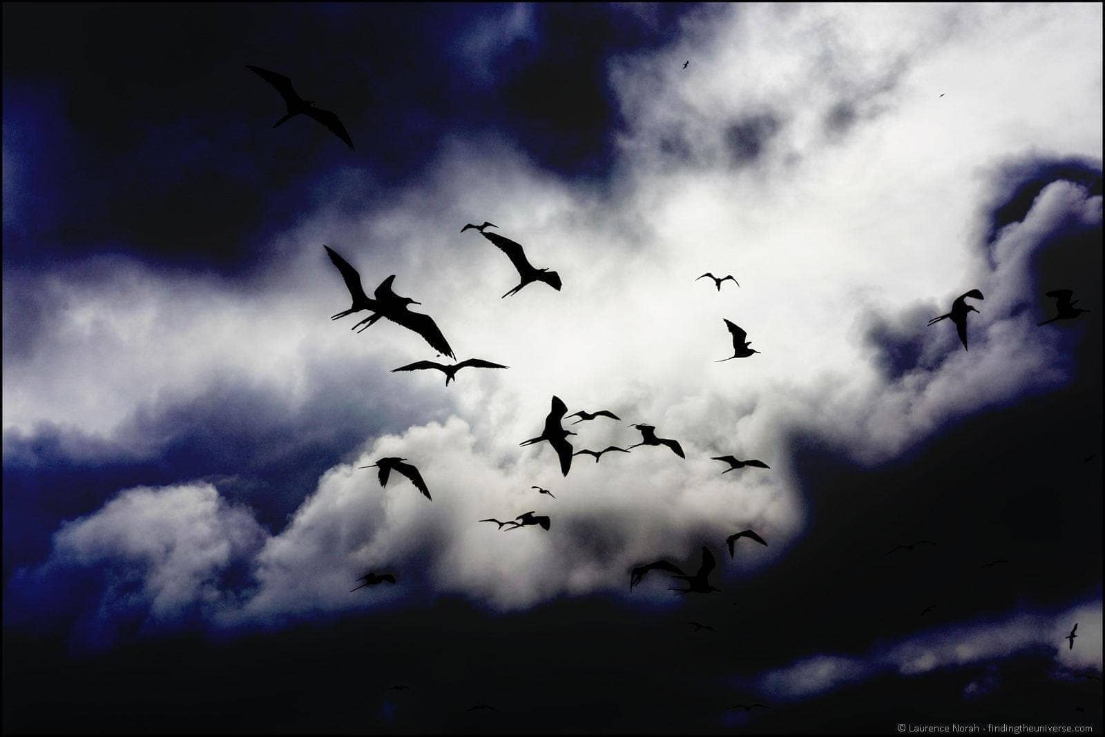 Frigate birds against clouds edit 3