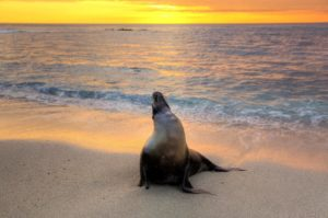 10 Things I didn't know about the Galapagos