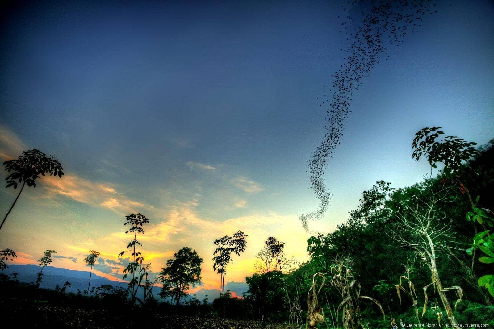 Bats emerge from cave sunset Khao Yai National Park Thailand