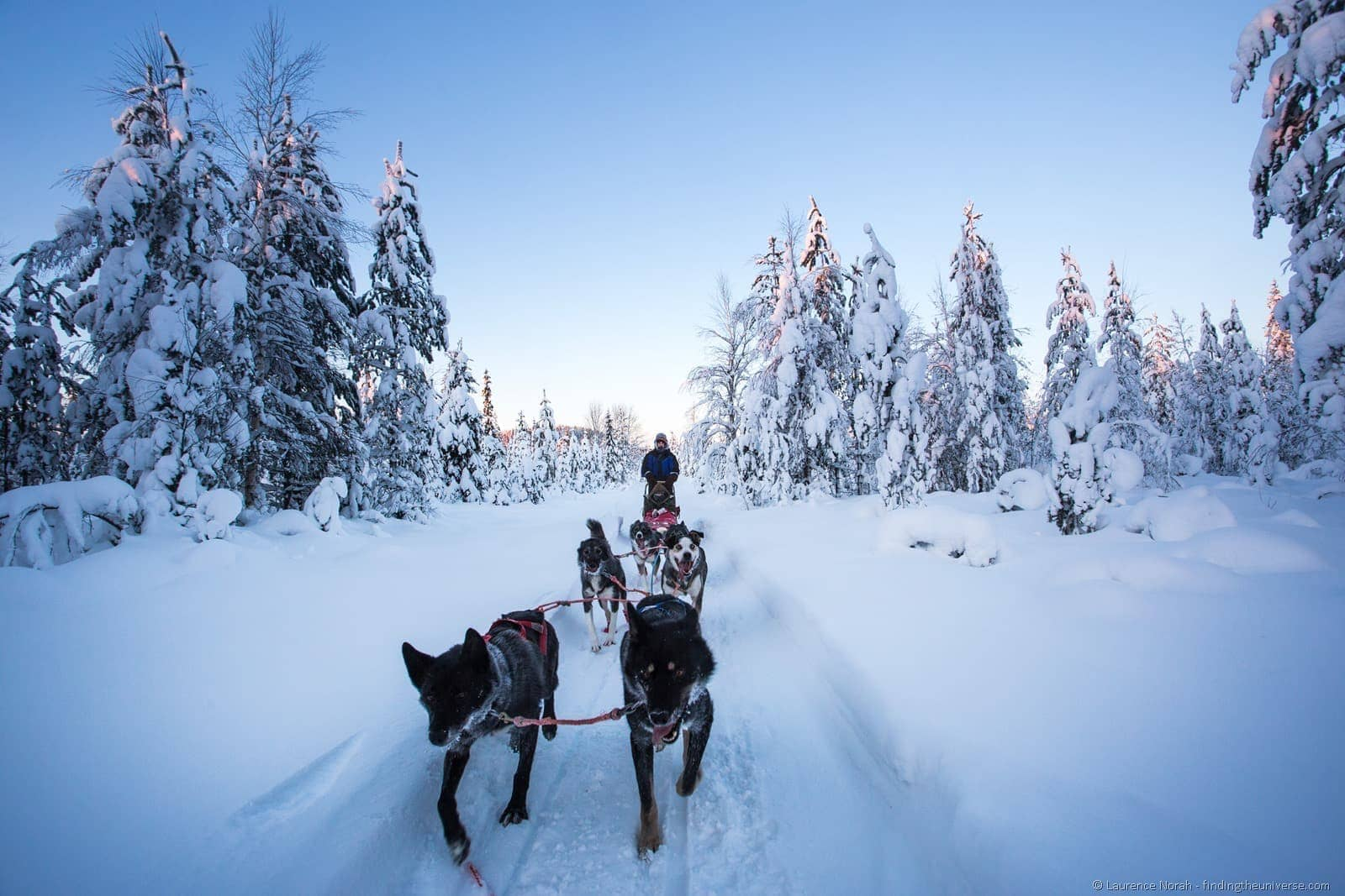 husky sledding in lapland