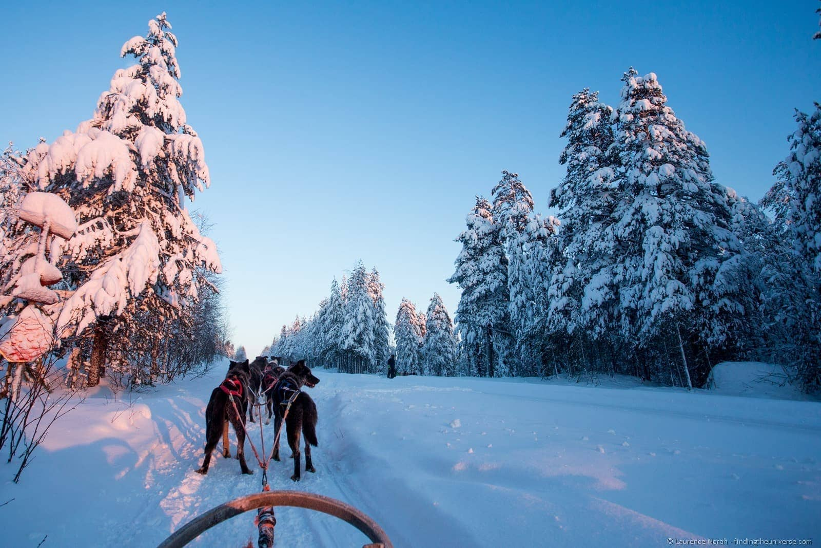 husky sledding view lapland finland
