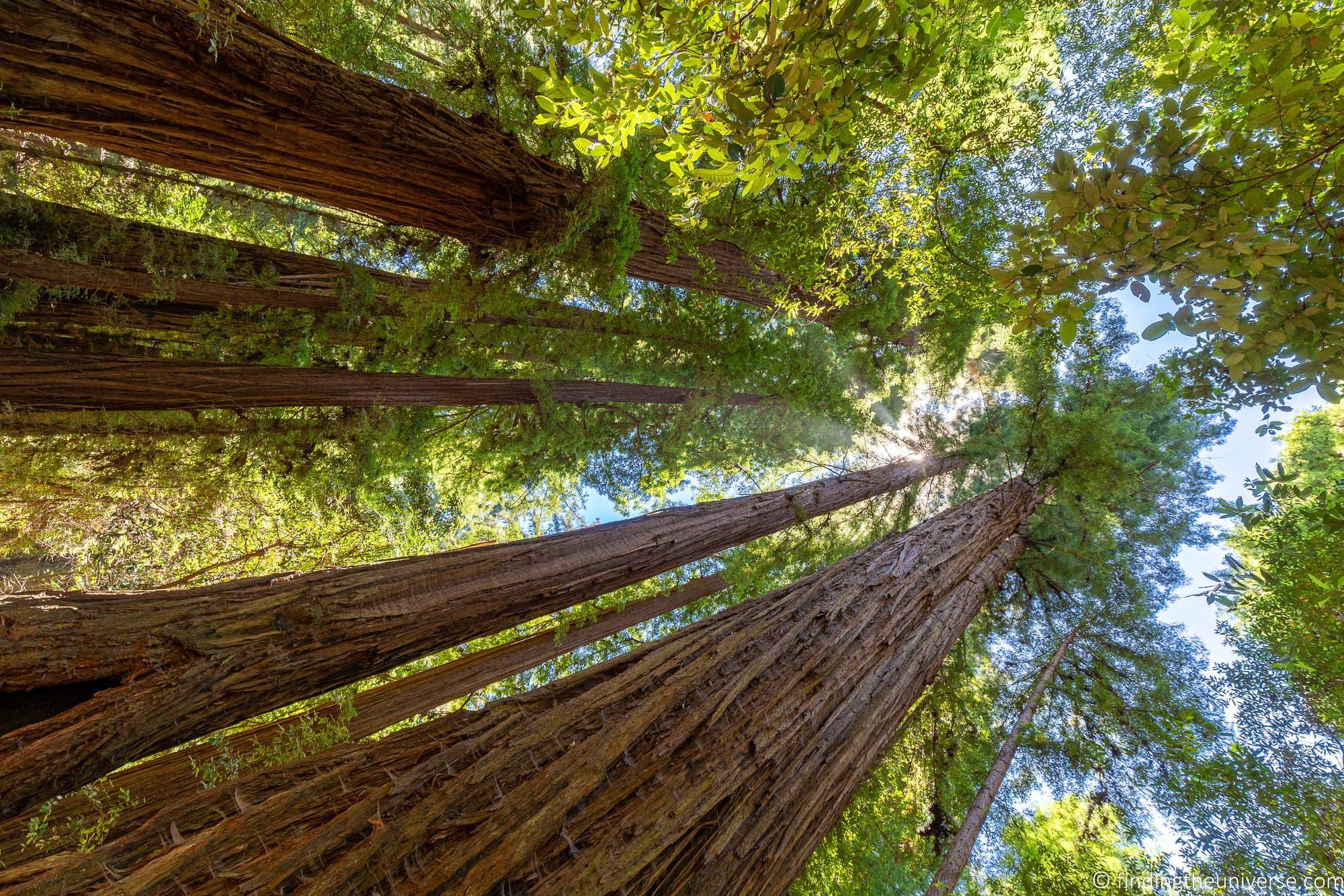 Redwoods Santa Cruz