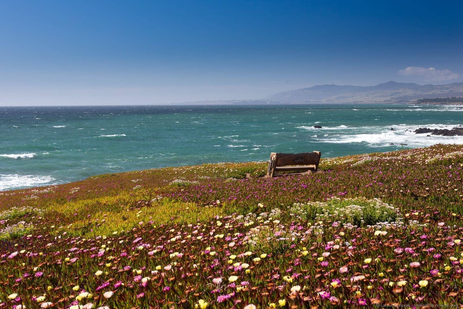 Bench on Coastal Bluff Trail Wildflowers Cambria California