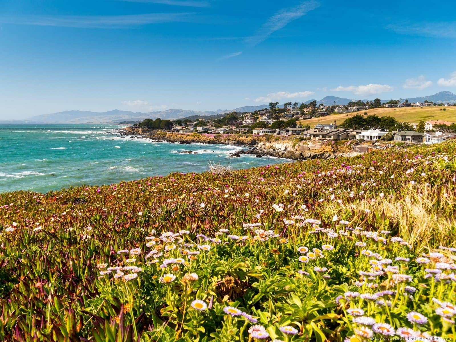 Coastal Bluff Trail Wildflowers Cambria California