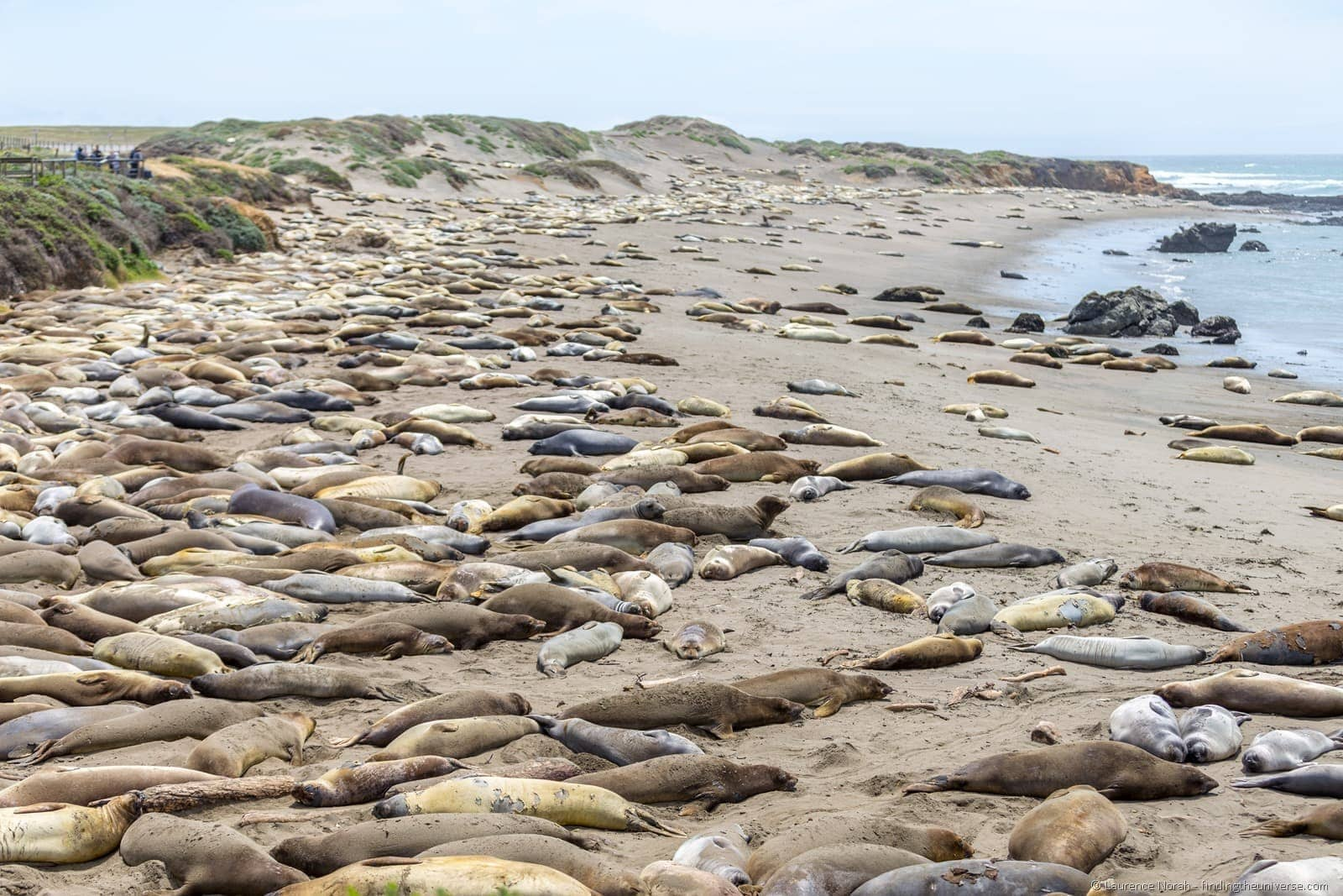Elephant Seal Rookery Cambria California