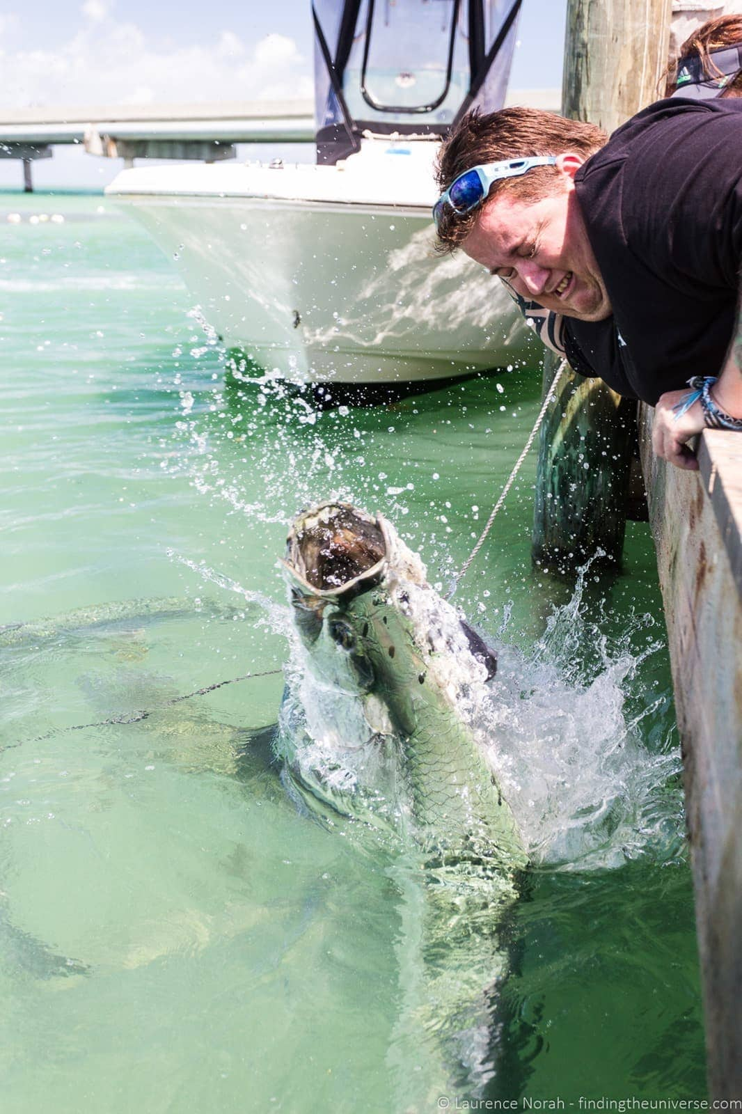 Feeding tarpon robbies florida keys