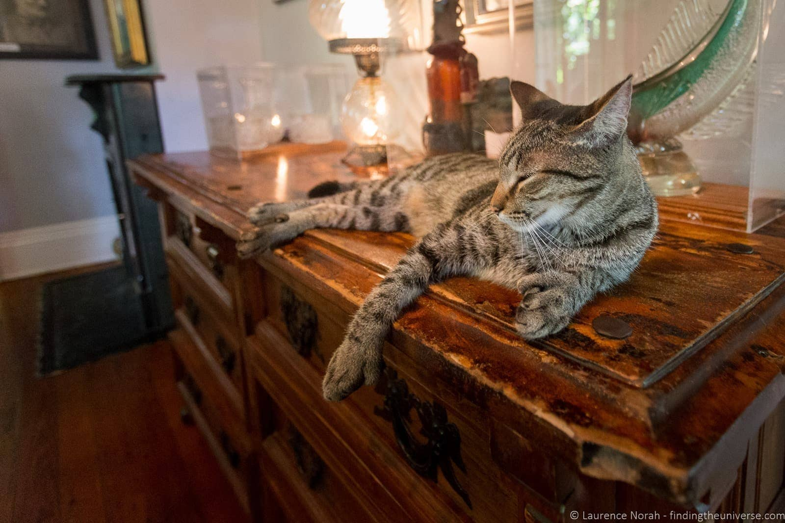 Six toed hemingway cat florida