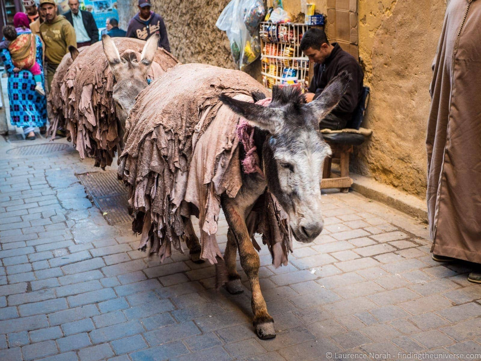 Donkeys carrying leather streets of Fez Morocco