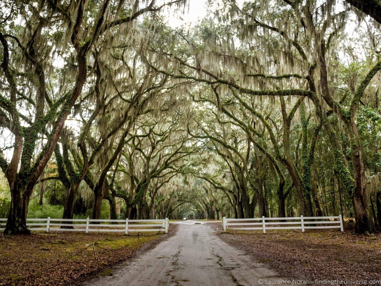 Wormsloe historic site oak avenue Savannah Georgia
