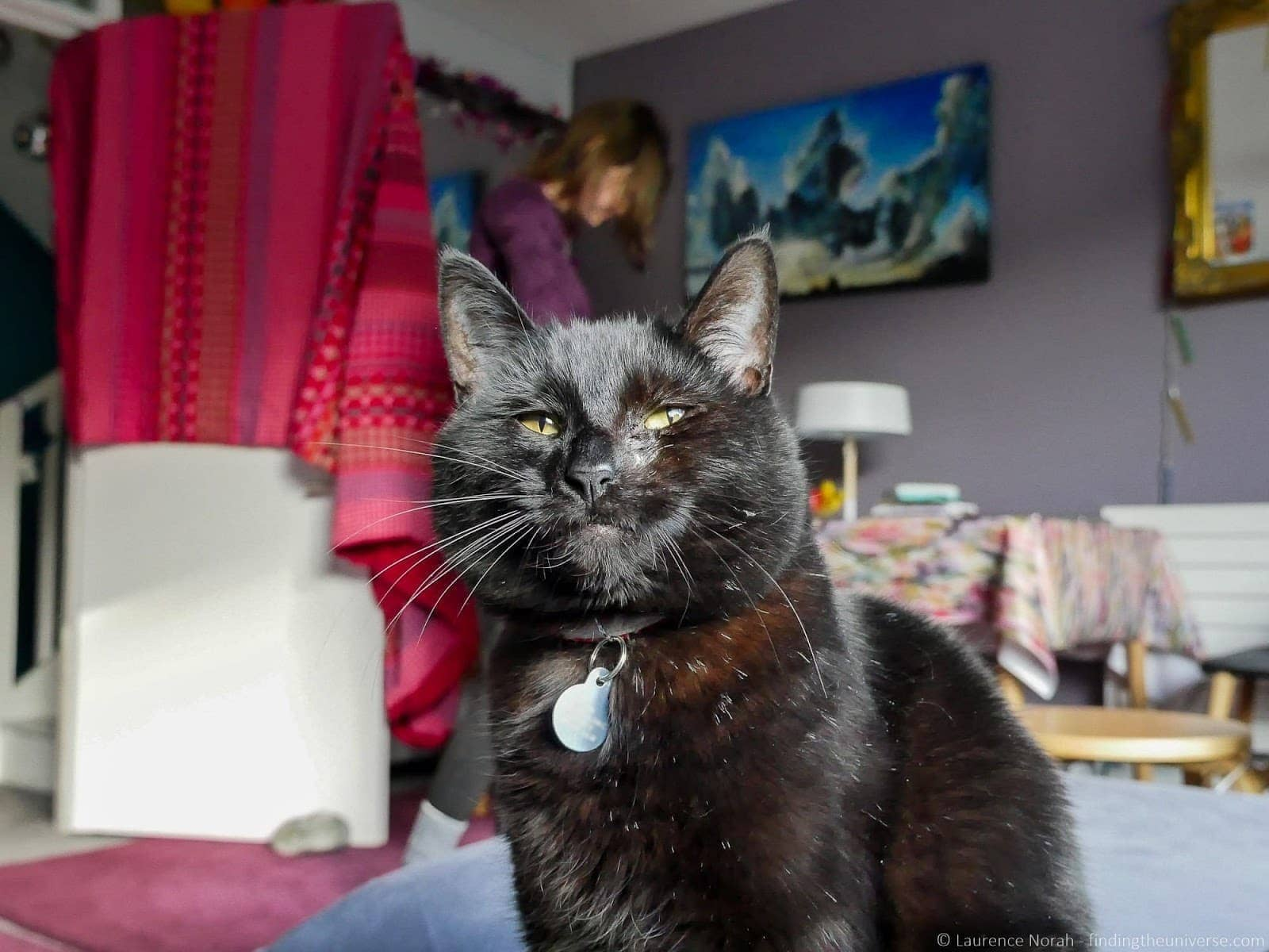 London Homestay Review cat