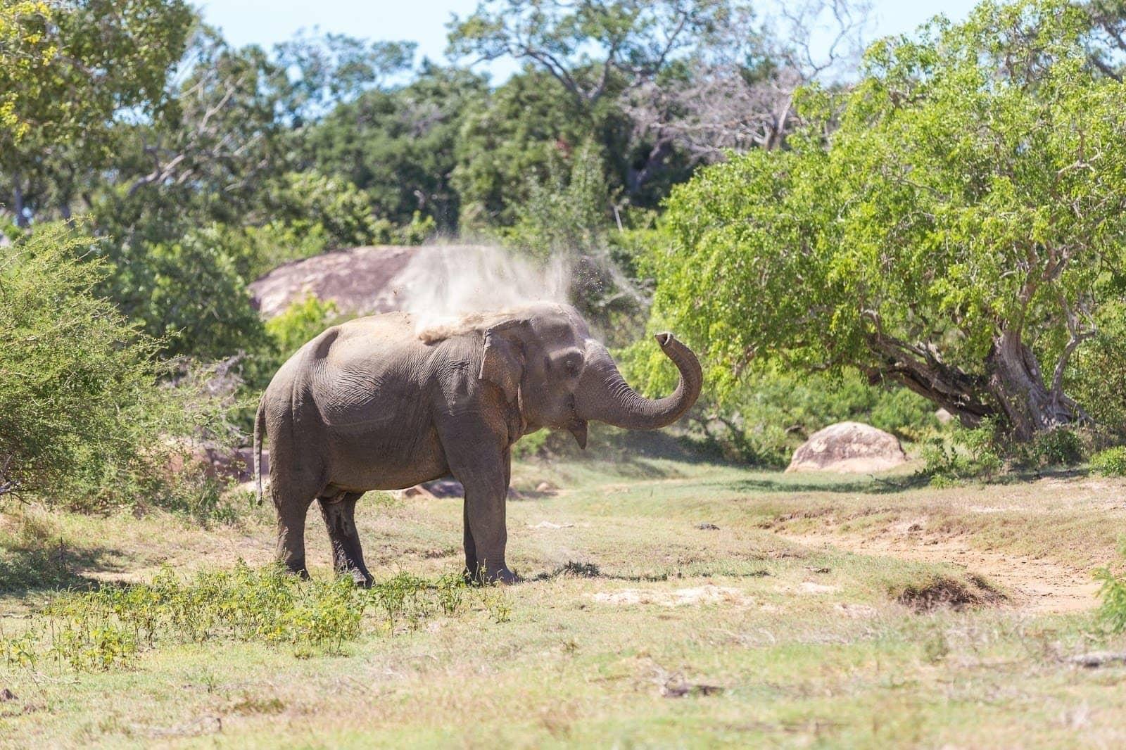 Yala National Park Sri LAnka