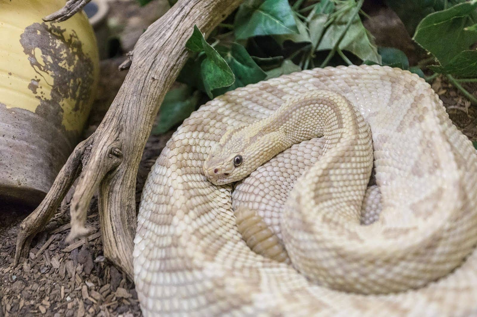 Albuquerque Rattlesnake museum_by_Laurence Norah
