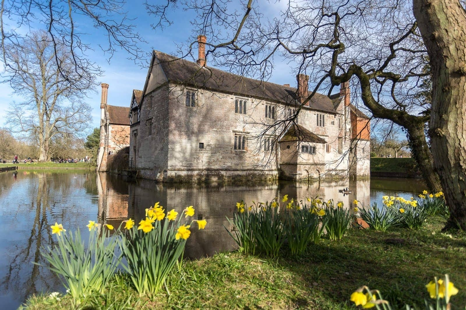 Baddesley Clinton Moated Manor House Daffodils UK by Laurence Norah