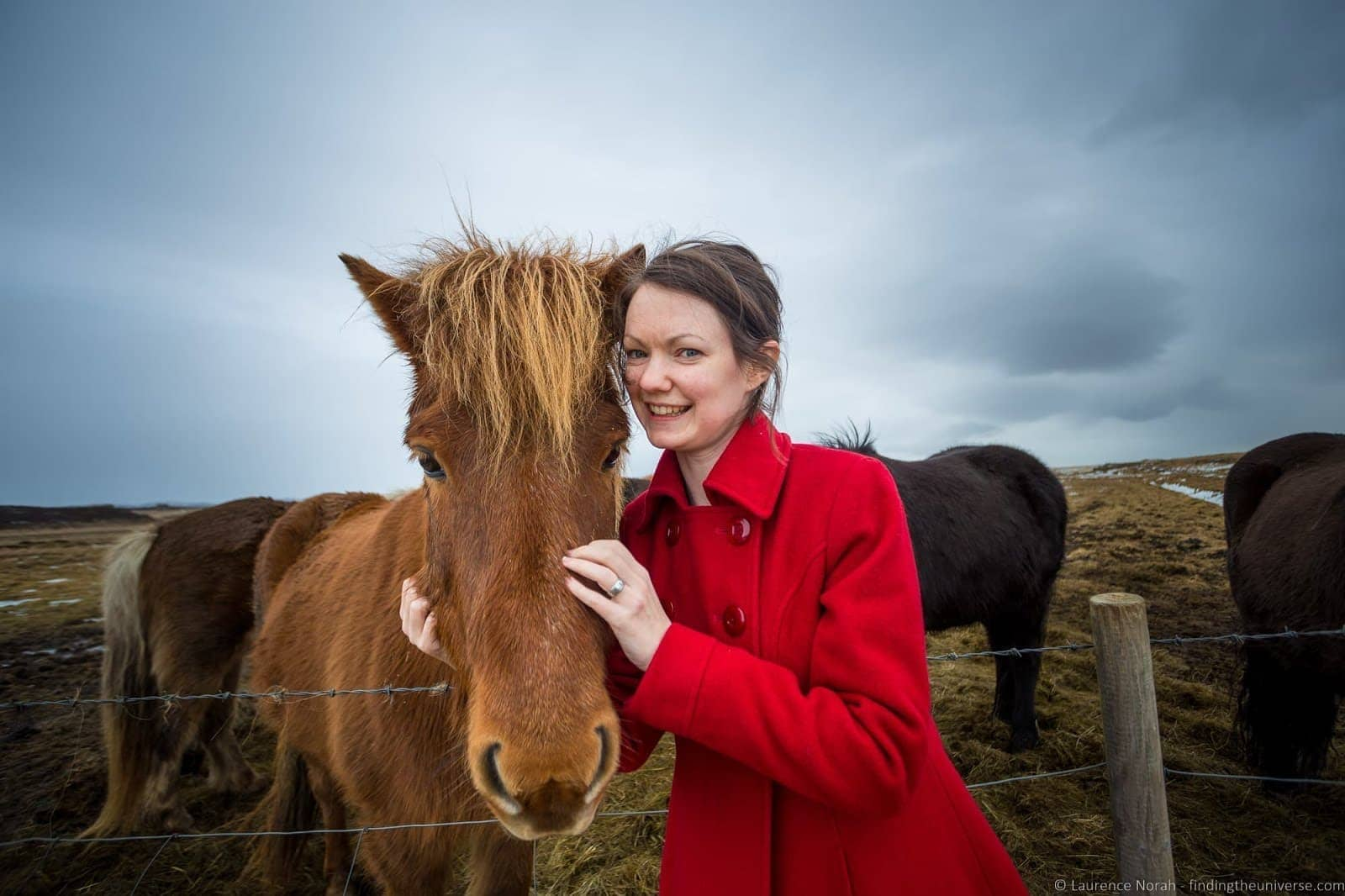 Icelandic Horses_by_Laurence Norah-2