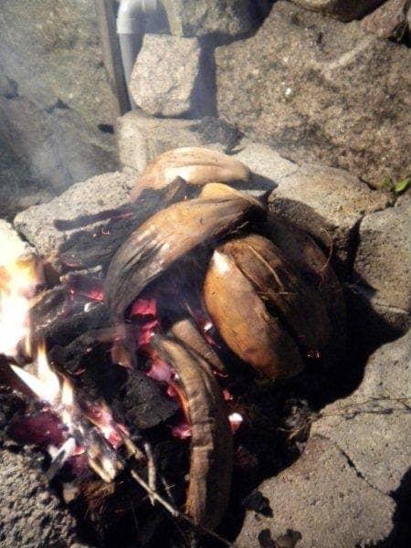 Breadfruit2