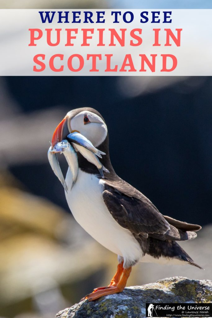 A guide to seeing puffins in Scotland from the Scottish Seabird Center in North Berwick - a perfect day trip from Edinburgh!