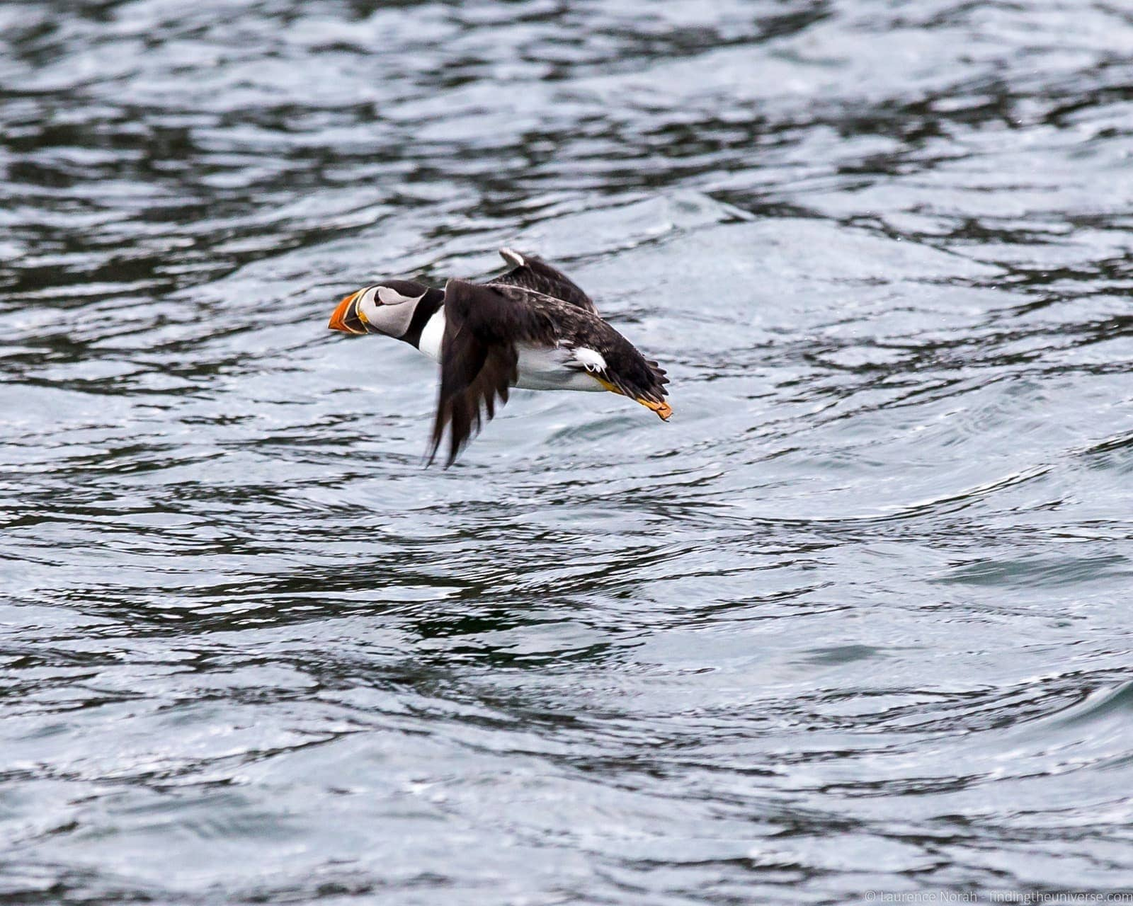 Scottish seabird center boat ride
