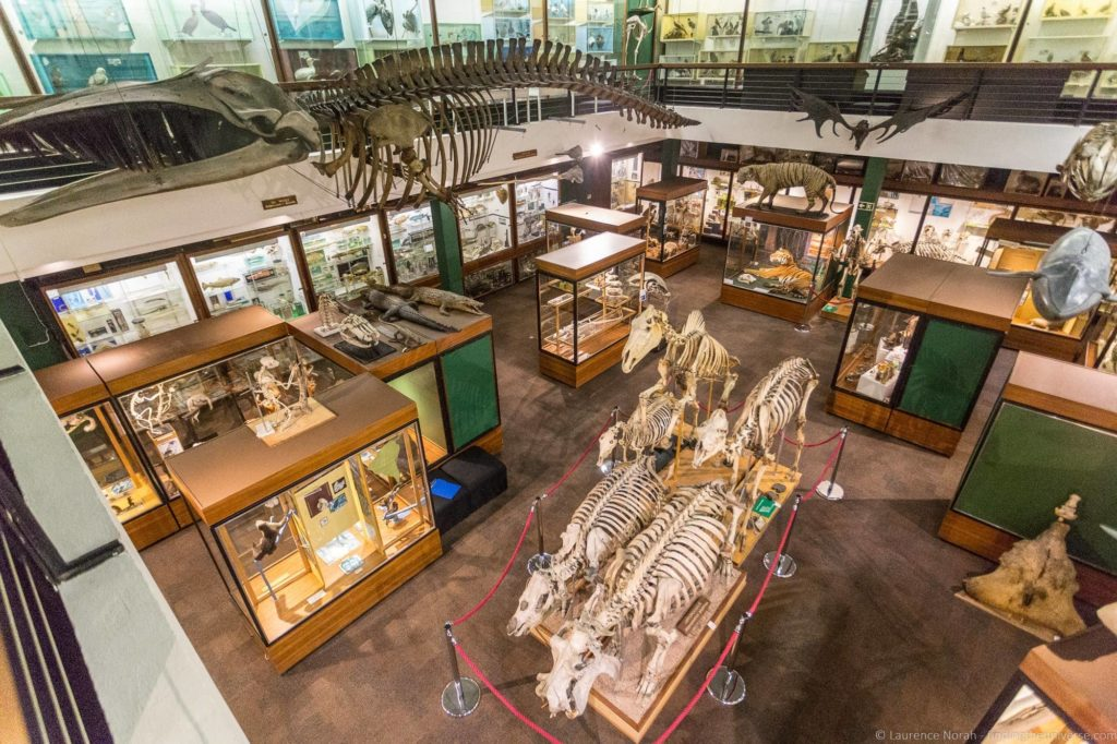 Aberdeen Zoology Museum