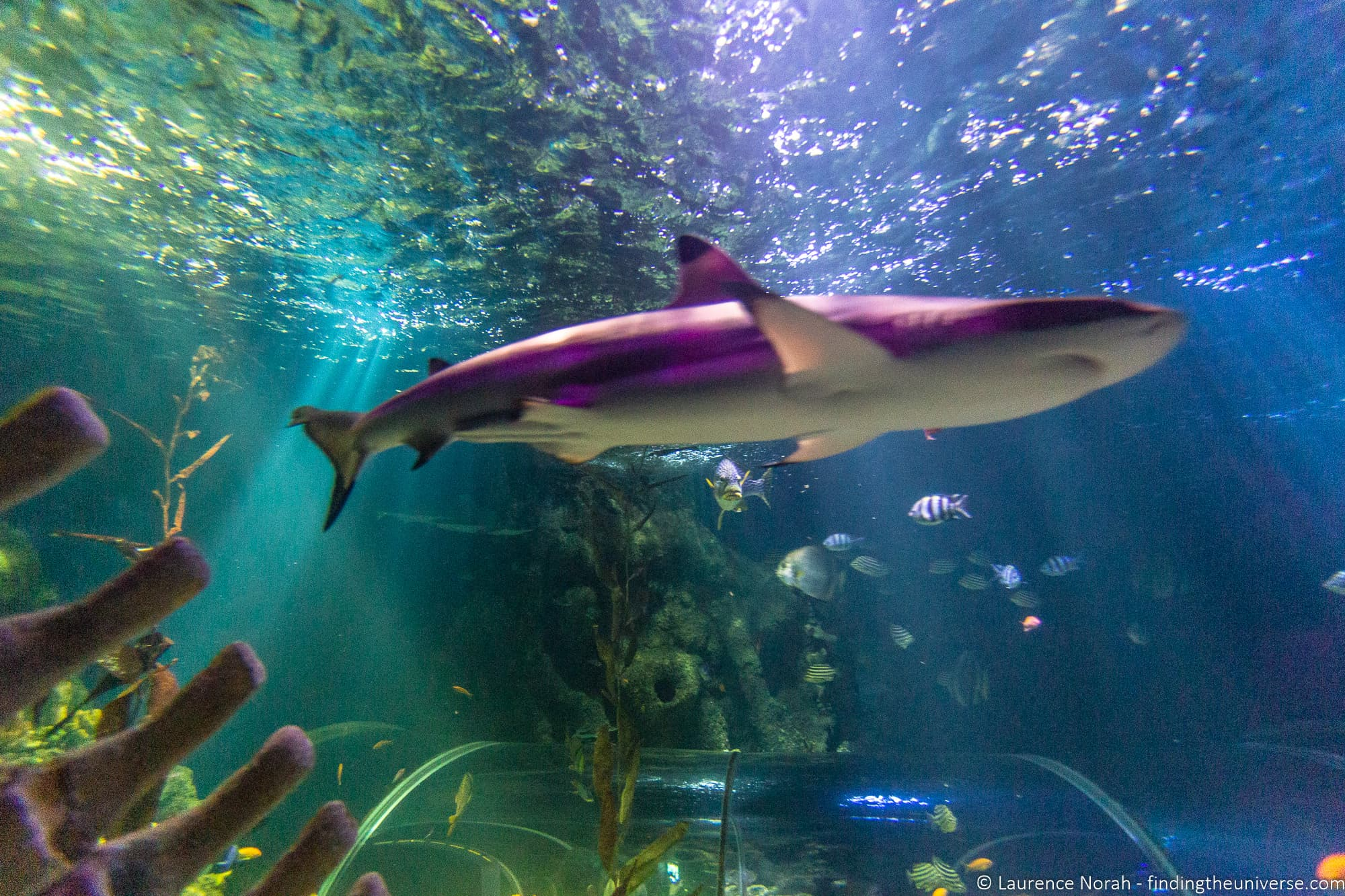 Helsinki Aquarium
