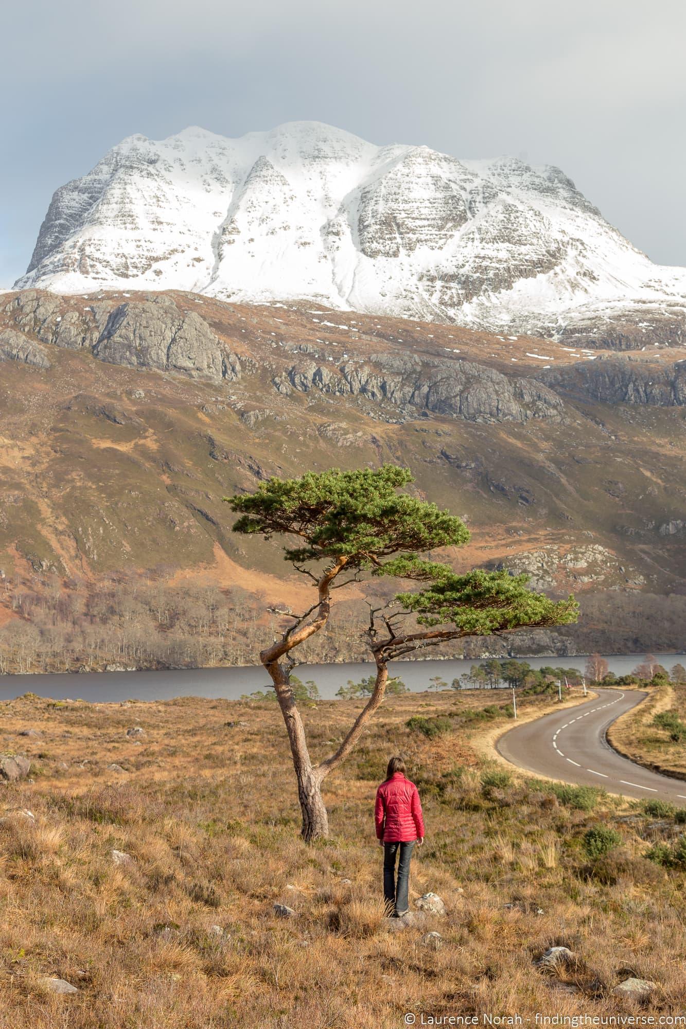 Lone pine Loch Maree