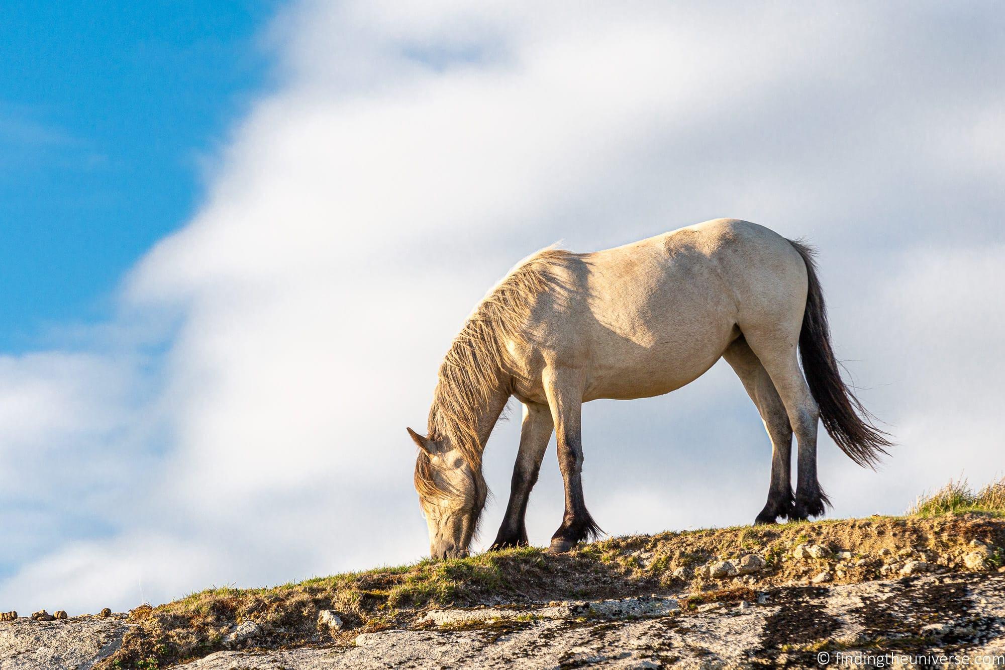 Wild pony Bodmin Moor Cornwall