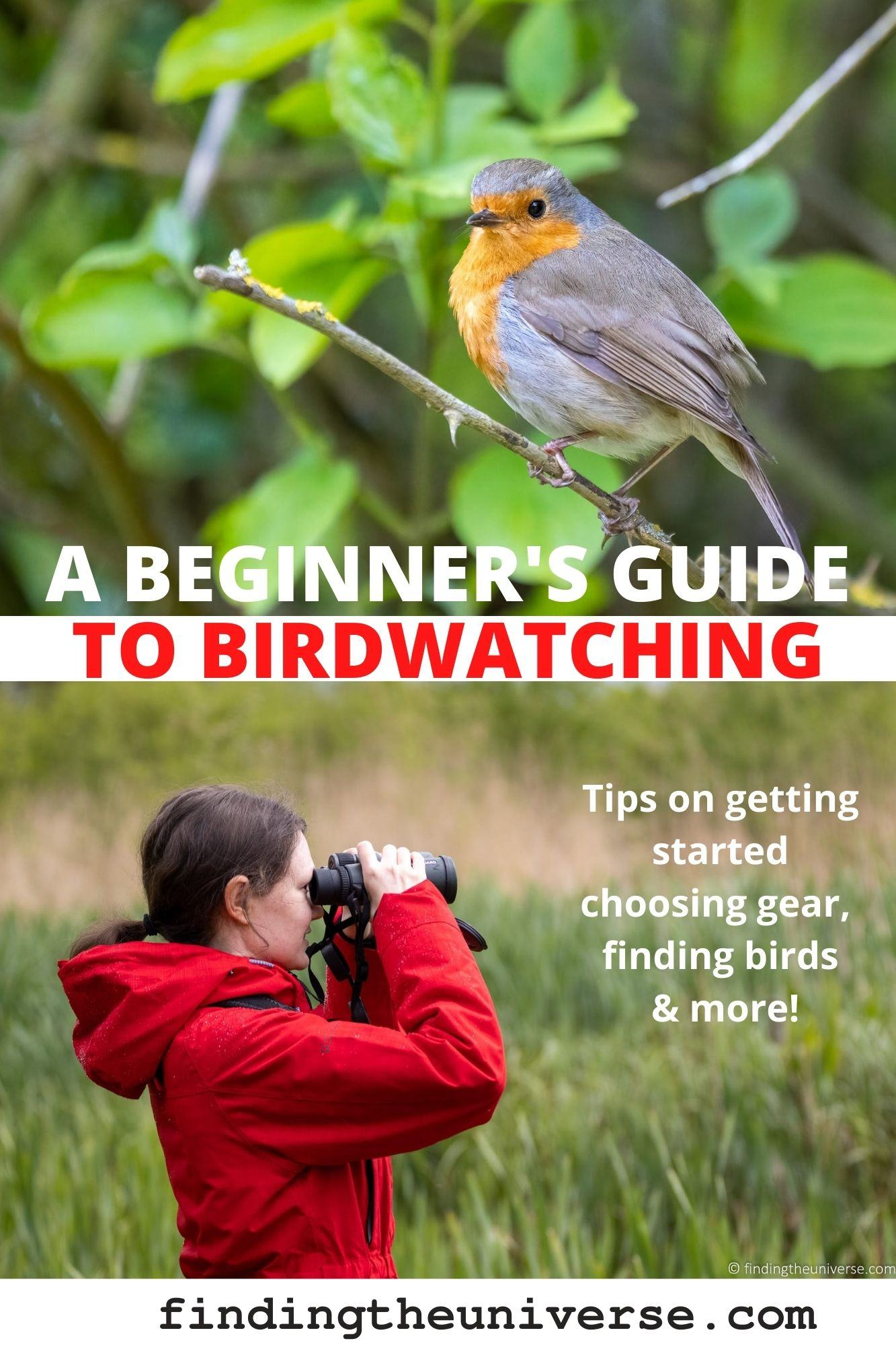 A detailed beginner's guide to birdwatching. Everything you need to know, from gear, to tips for photographing birds to finding them!