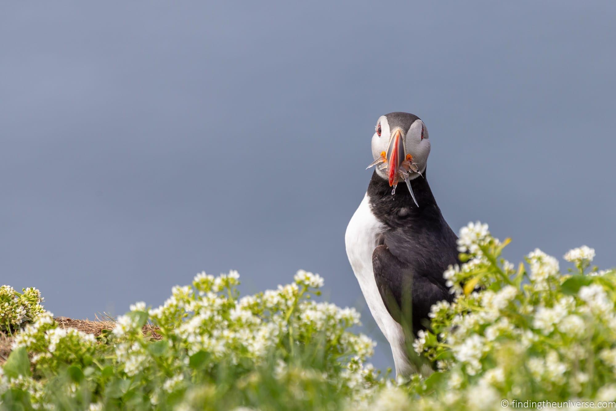 Birdwatching for beginners